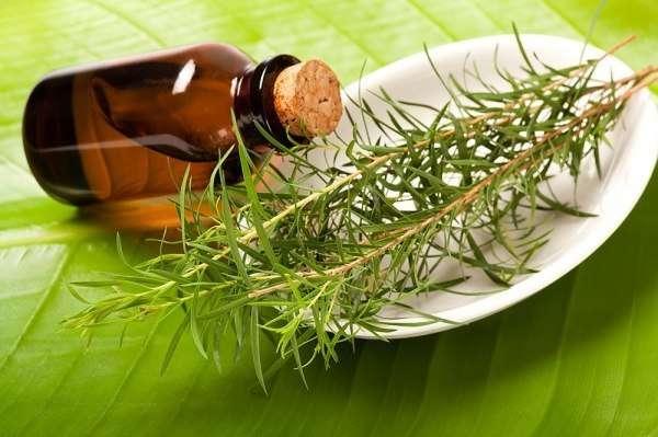 масло из чайного дерева