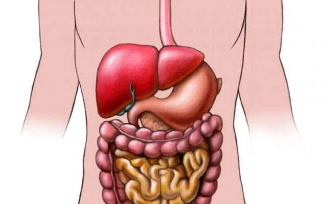 желудочно-кишечный тракт человека